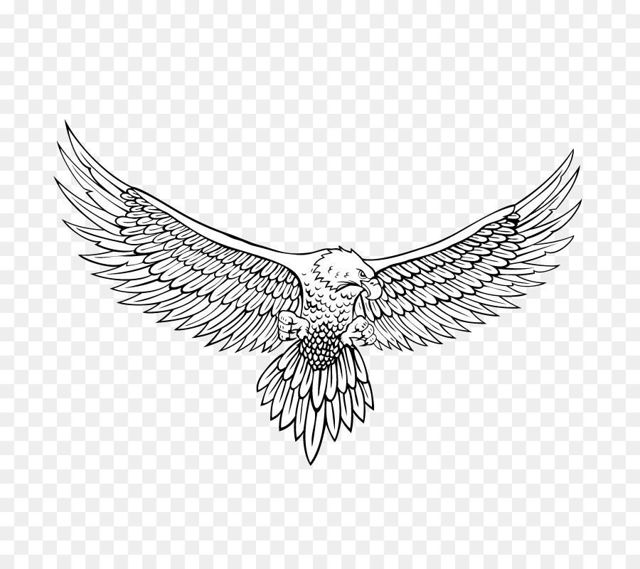 bald eagle drawing line art eagle png download 800 800 free