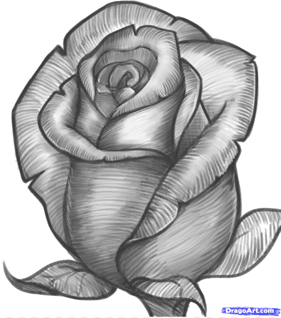 Drawing rose pencil sketch drawings of roses png download 11181262 free transparent drawing png download