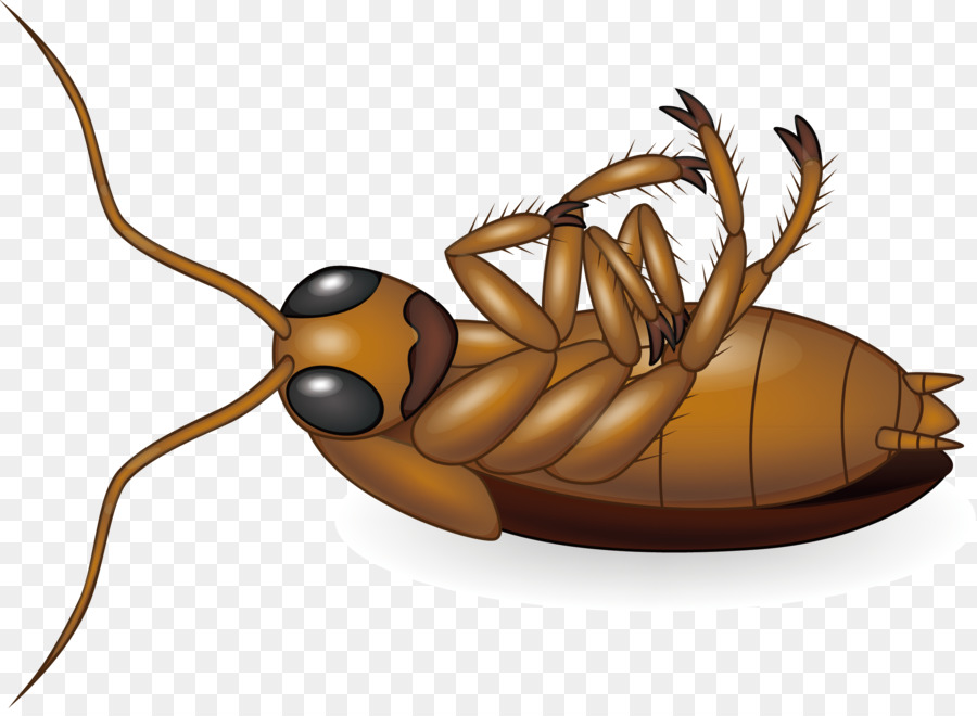 Cockroach Royalty-free Clip art - Cockroach vector design creative ...
