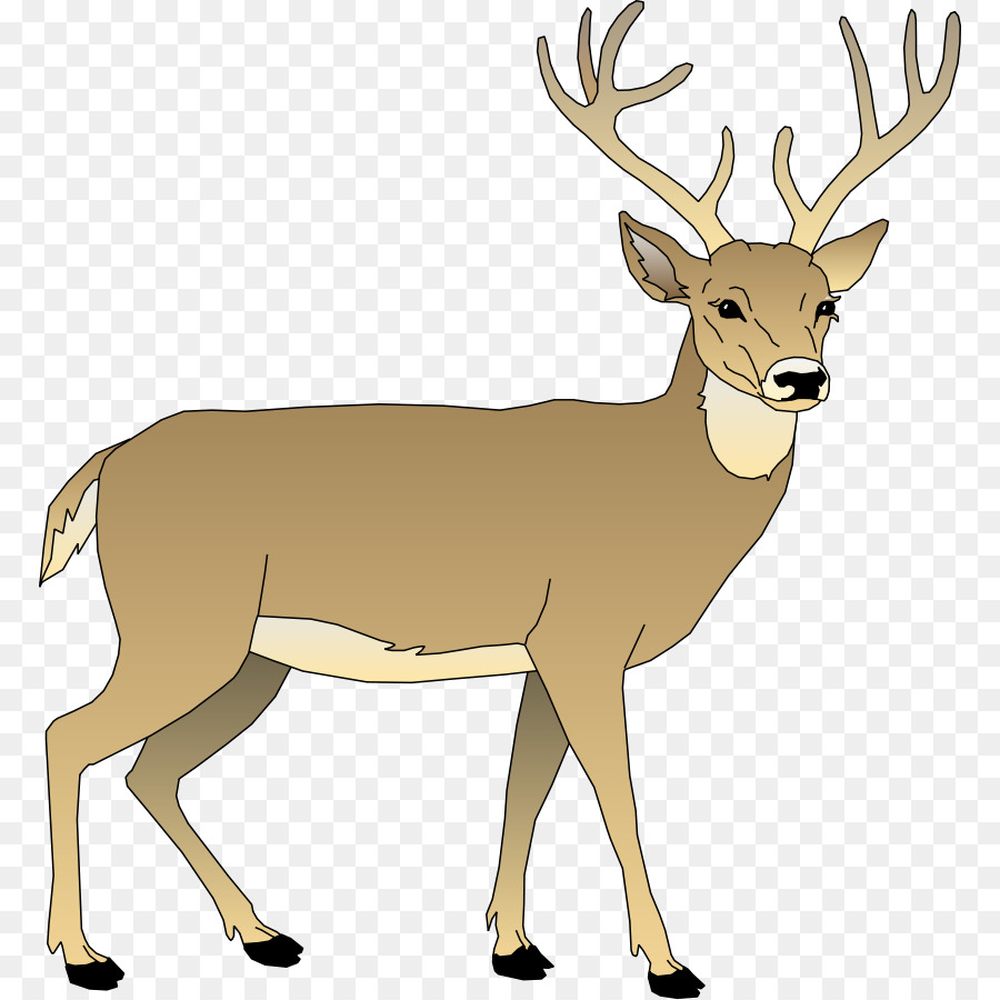 white tailed deer clip art realistic reindeer cliparts png rh kisspng com white tailed deer clip art white tailed deer clipart