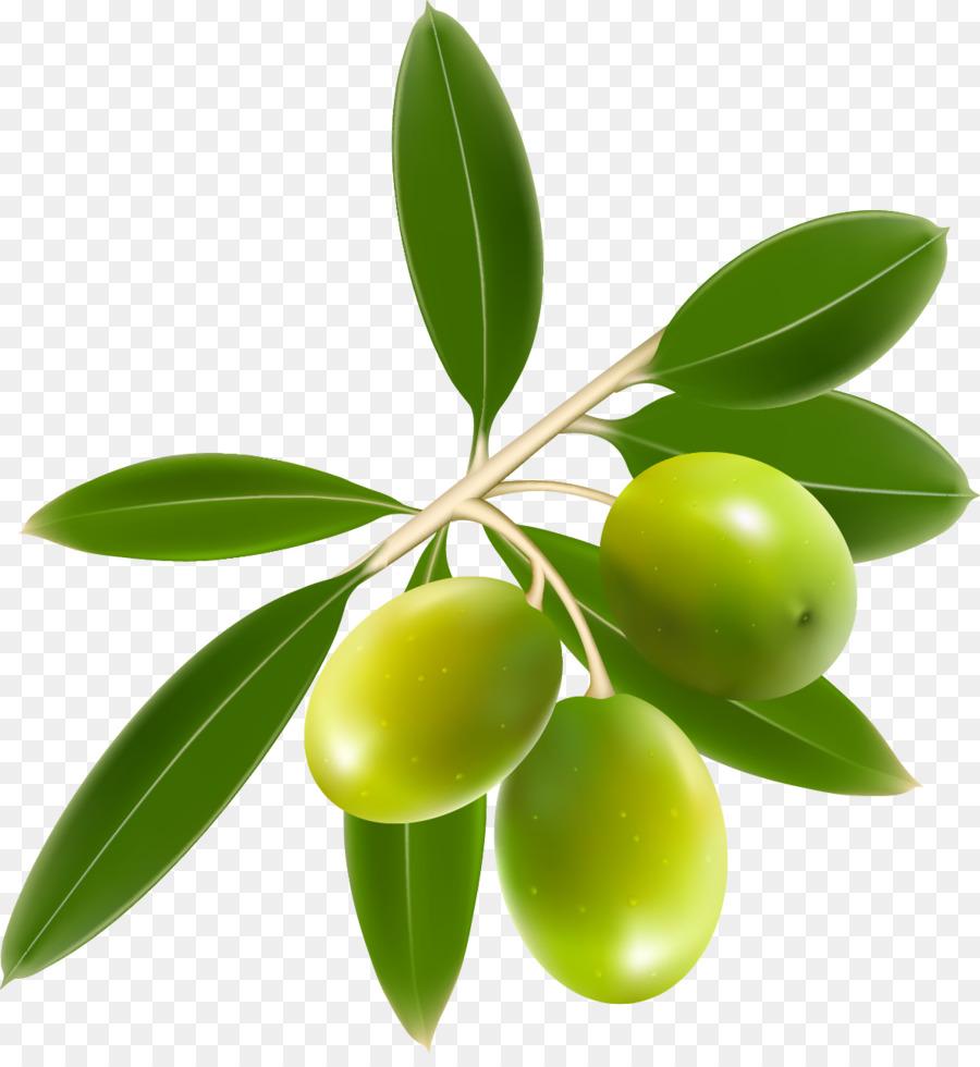 Olive oil Clip art - Olives png download - 1179*1267 ...