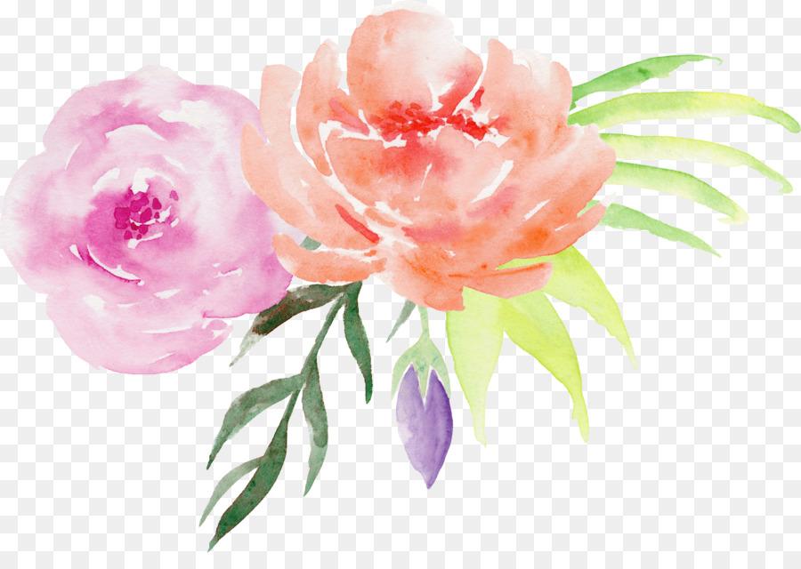 Centifolia Rosas De Flor De La Pintura A La Acuarela De