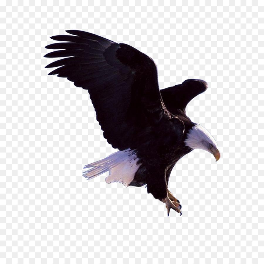 Bald Eagle Bird - Flying Eagles png download - 2500*2500 - Free ...