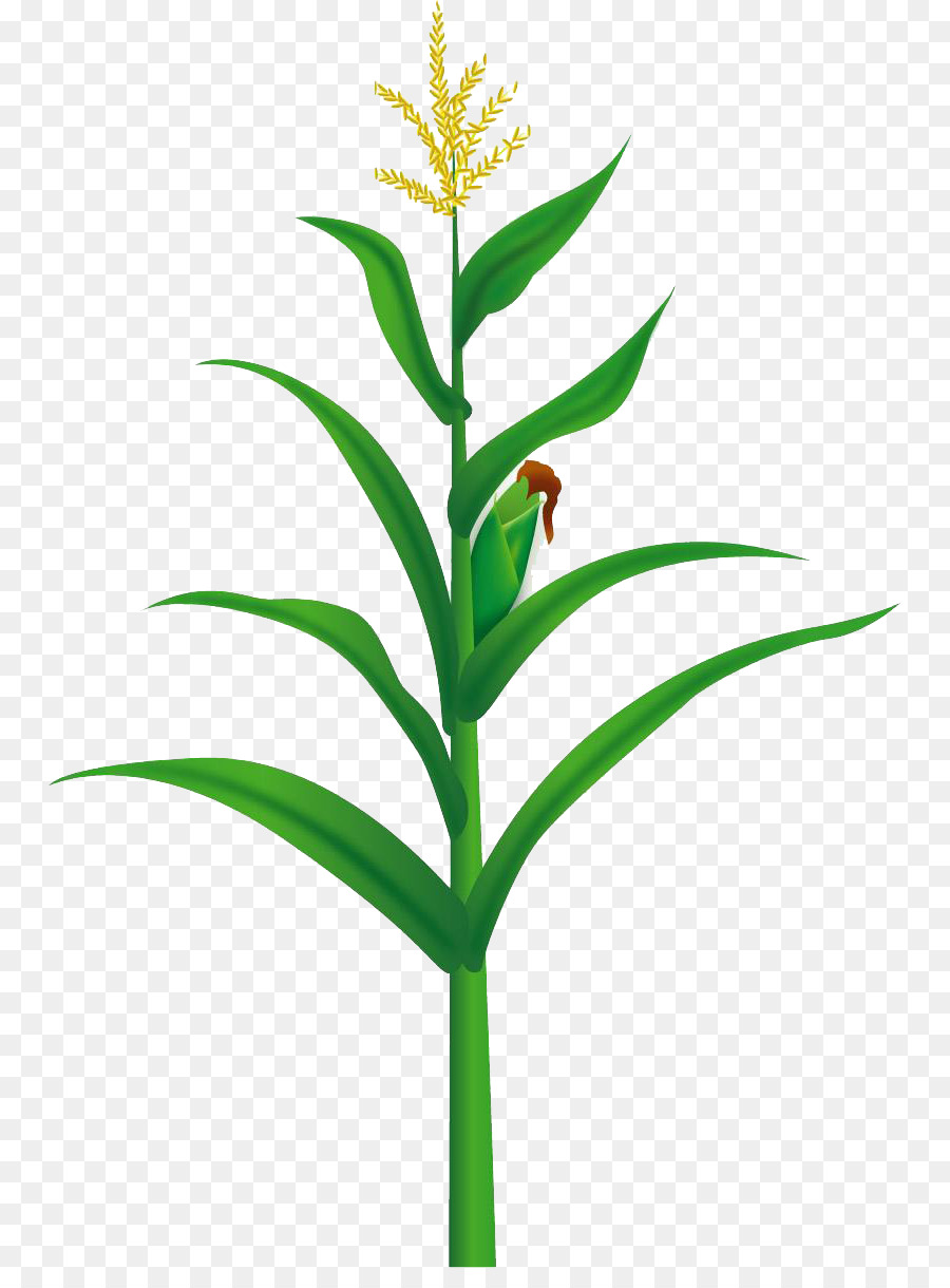 Maize Food Illustration Yellow Corn Tree Png Download 8101201