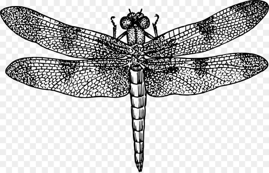 dragonfly royalty free clip art vector dragonfly png download