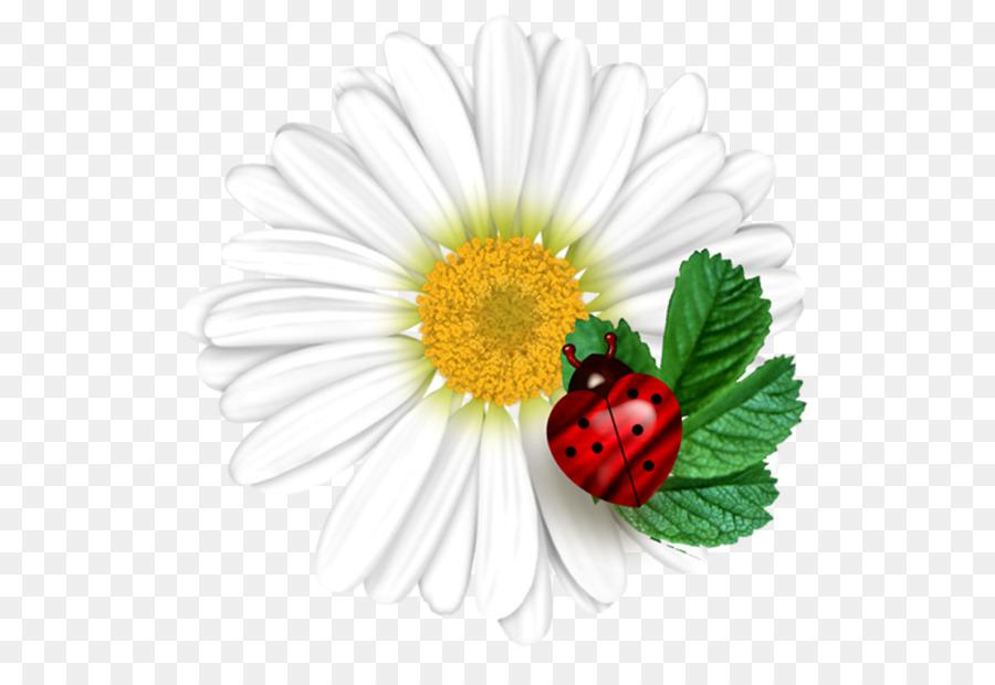 Gemeinsame Daisy Marienkäfer Blume Marienkäfer Png Herunterladen