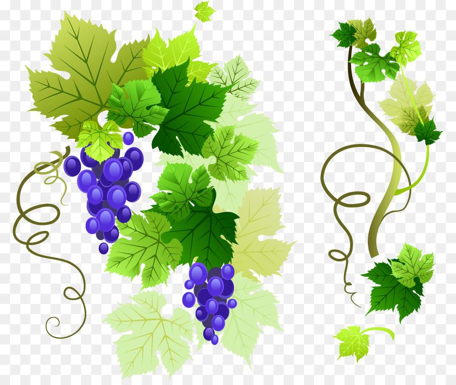 Common Grape Vine Leaves Clip Art