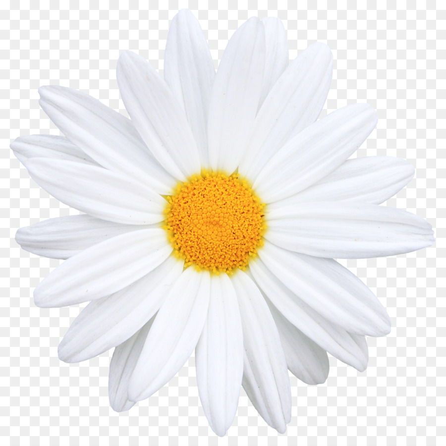 Flower Common Daisy Icon Creative Bouquet Of Flowers Image Png