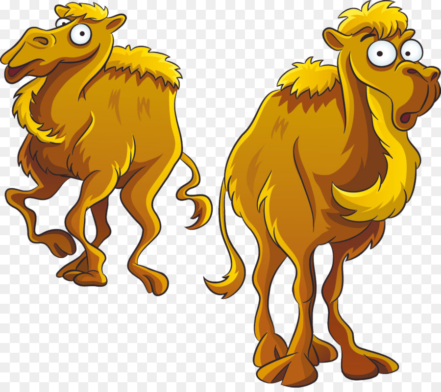 Lion Drawing png download - 935*822 - Free Transparent Camel