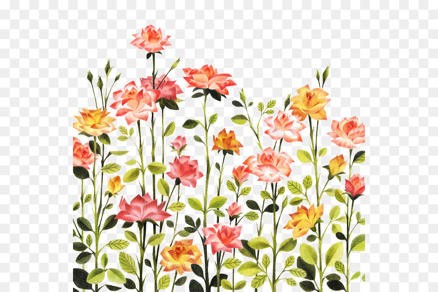Rose Illustration Hand Painted Pattern Rose Bushes Png Download