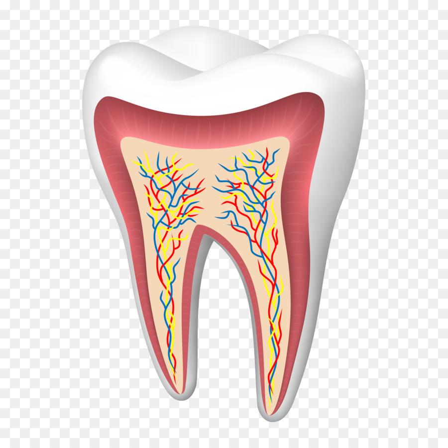 Humanos diente, Agrietados síndrome del diente - Dientes sanos de ...