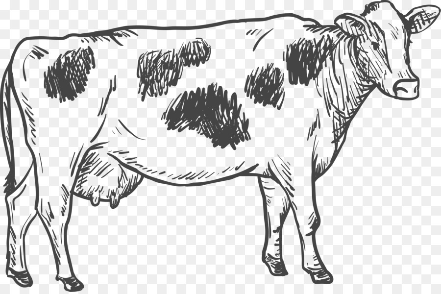 Cattle Drawing Illustration