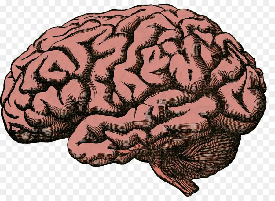 Human Brain Project Homo Sapiens Human Body Rusty Brain Png