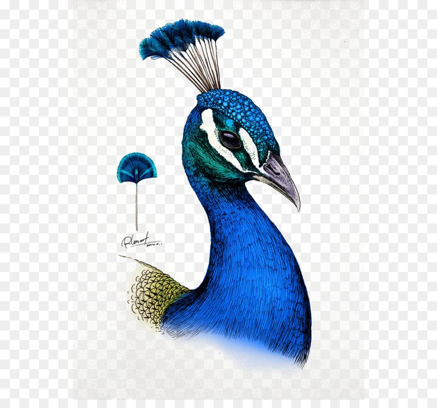 Dibujo Millie Marottas Reino Animal - Un Libro para Colorear ...
