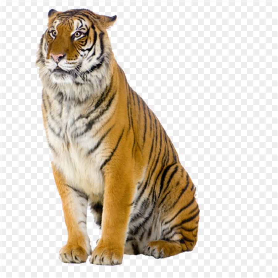 tiger pizza steve cat stock photography tiger png grandpa clip art printable grandpa clip art printable