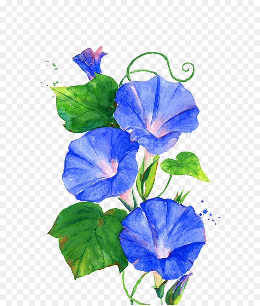 Ipomoea Nil Flower Vine Blue Trumpet Flowers Png Download 700