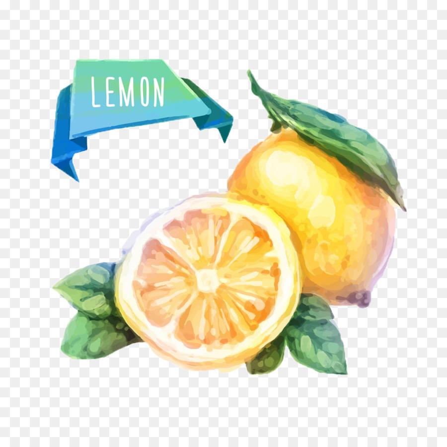 Boyama Meyve Resimde çizim Suluboya Taze Limon Png Indir 1000