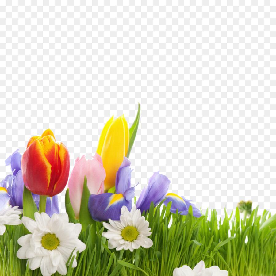 Flower spring wallpaper beautiful tulips png download 10241024 flower spring wallpaper beautiful tulips izmirmasajfo