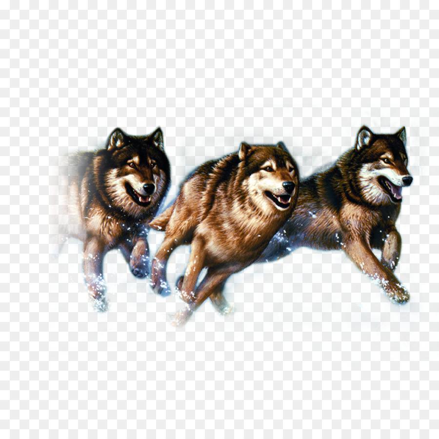 Gray Wolf Werbung Wolf Kostenloser Download Bilder Png