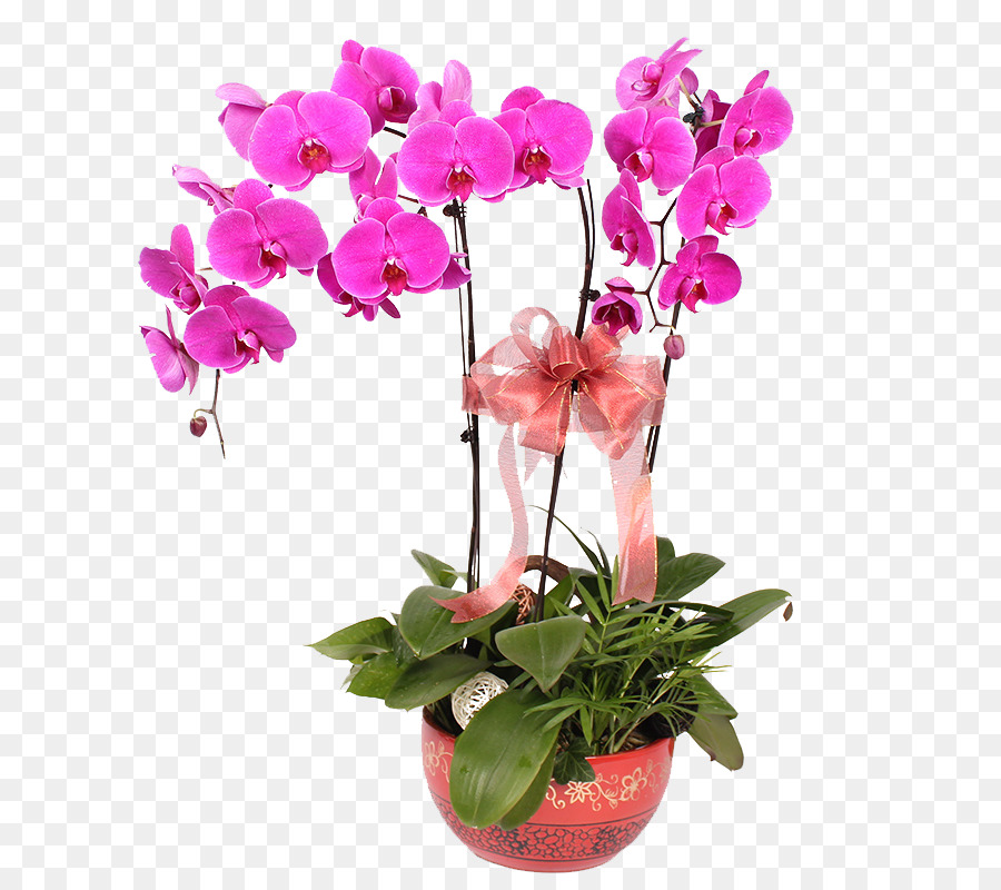 Moth Orchids Vase Flower Vase Png Download 800800 Free
