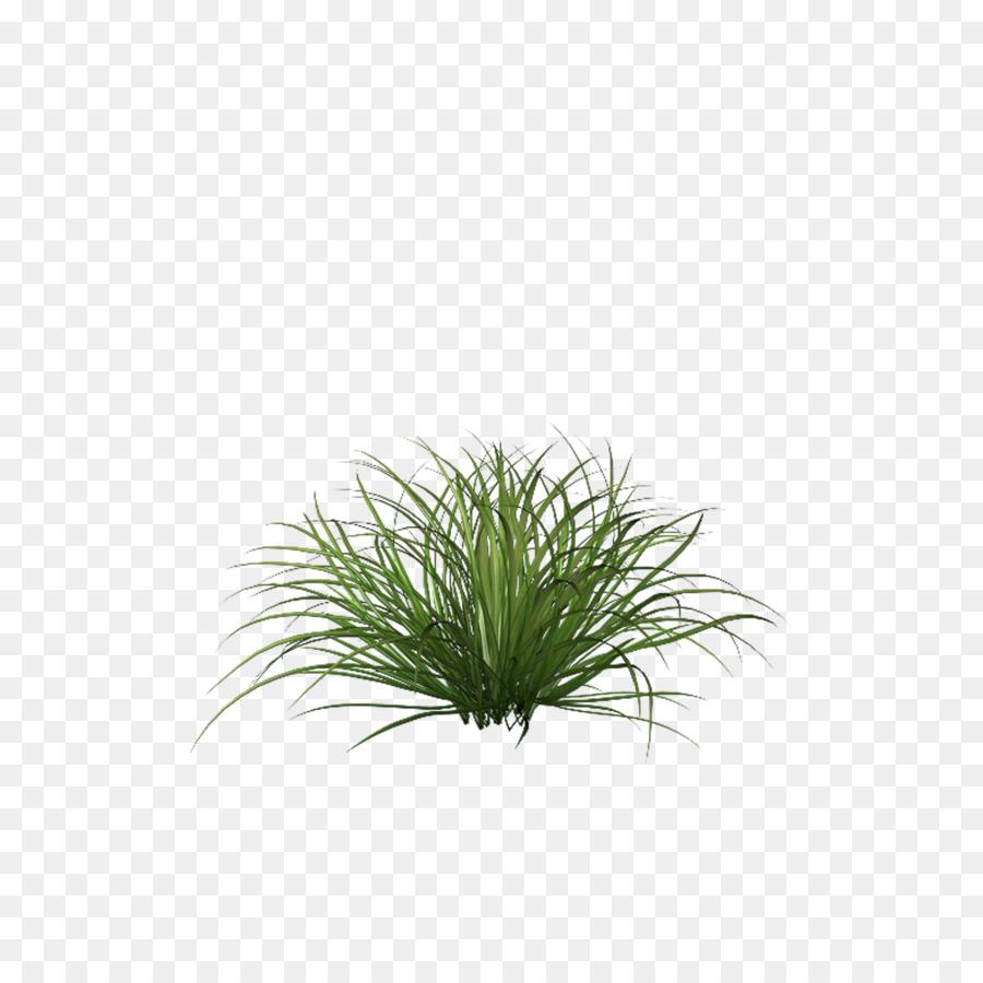 Rumput Dan Biji Bijian Clip Art Hijau Unduh 36003600 Tanaman Hias
