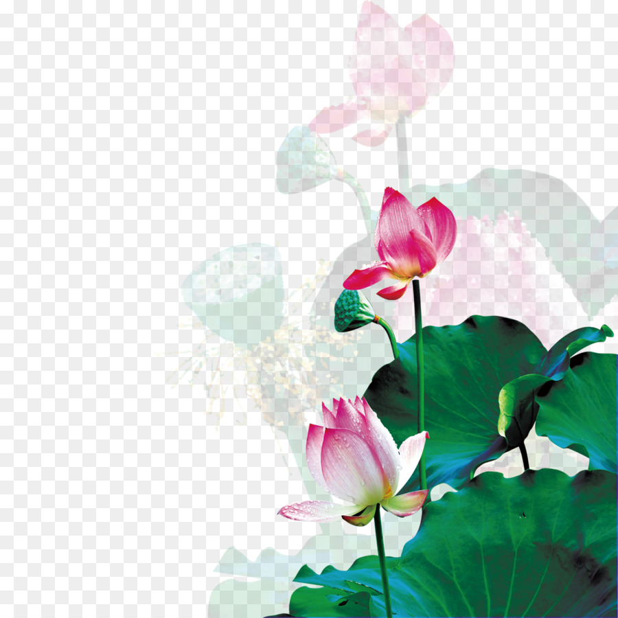 Mid Autumn Festival Mid Lotus Png Download 16331633 Free