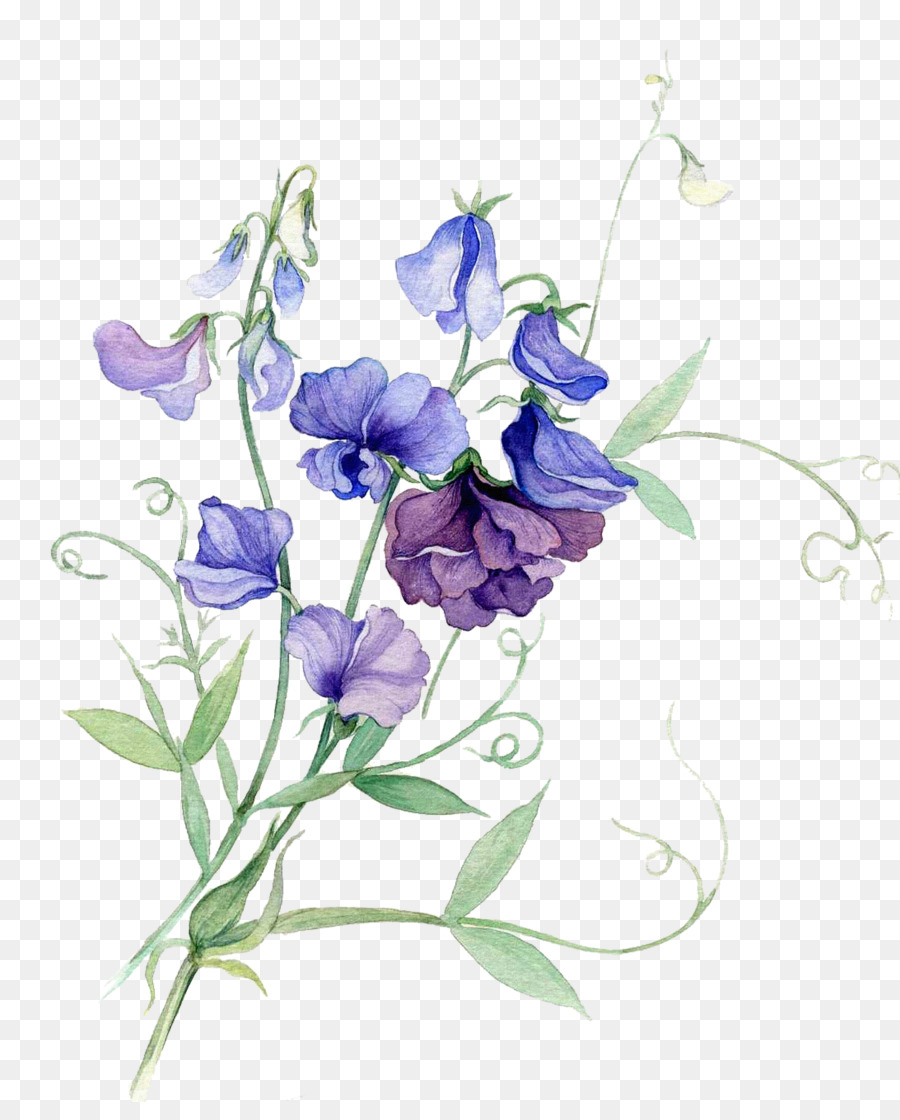 Watercolor painting flower sweet pea bouquet of flowers cartoon watercolor painting flower sweet pea bouquet of flowers cartoon pictures izmirmasajfo