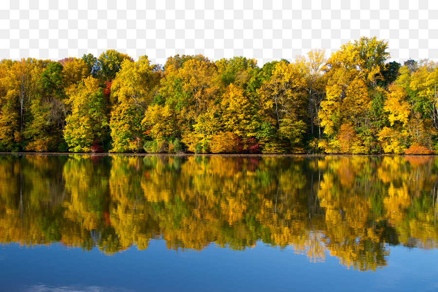 wallpaper - forest lake background png download