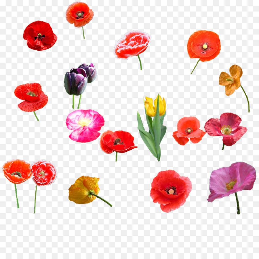 Poppy Flower Bouquet Tulip Tulip Flowers Png Download 10001000