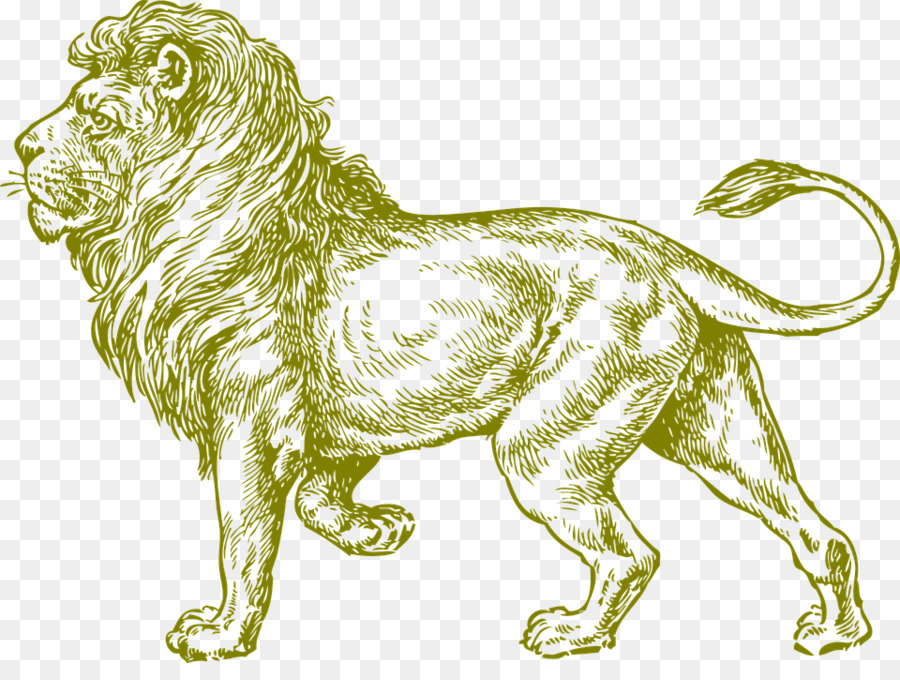 White lion drawing black and white clip art lionanimalwild animals