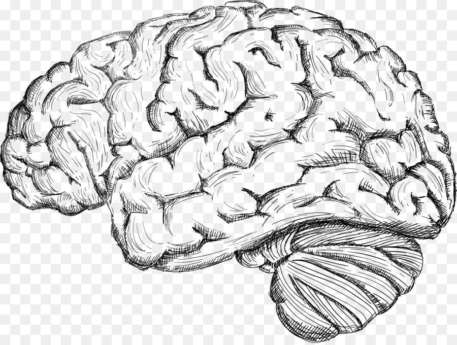 Menschlichen Gehirns Großhirn Zeichnung - Skizze des menschlichen ...