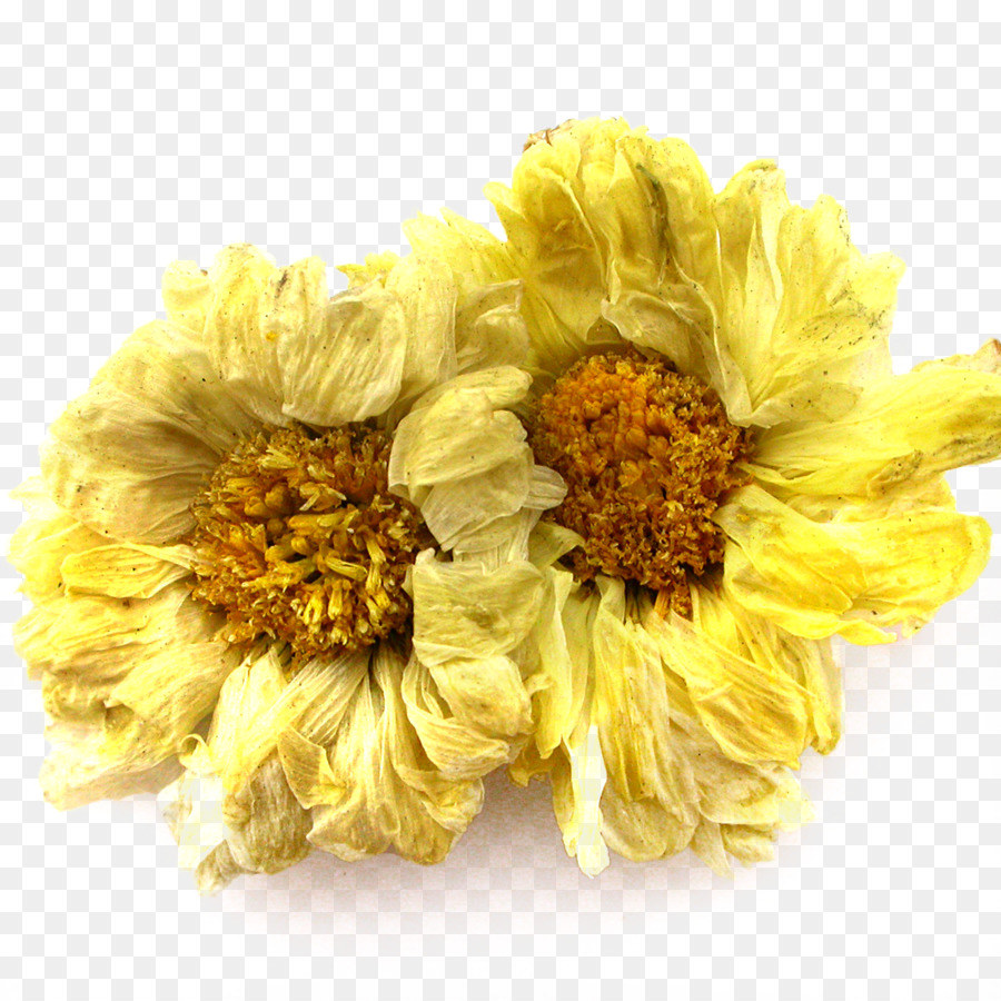 Chrysanthemum xd7grandiflorum chrysanthemum indicum chrysanthemum chrysanthemum xd7grandiflorum chrysanthemum indicum chrysanthemum tea dendranthema lavandulifolium chrysanthemum chrysanthemum flower png material mightylinksfo