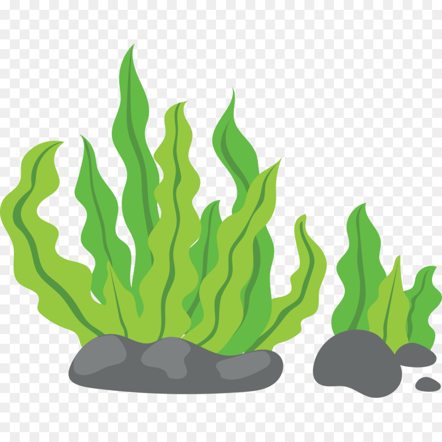 seaweed clip art green background png download 1181 1181 free rh kisspng com seaweed clipart png seaweed clipart png