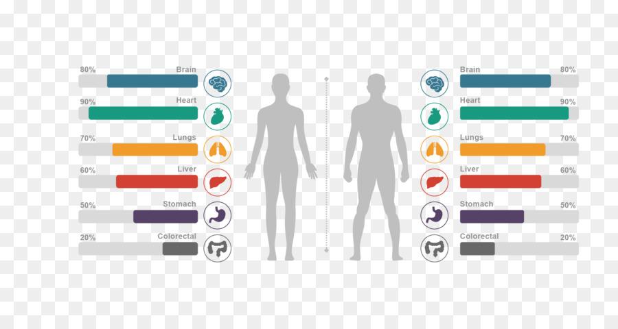 Cuerpo humano Gráfico de la anatomía Humana, el Homo sapiens sapiens ...