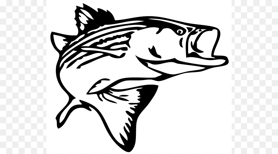 striped bass fishing decal clip art bass jumping cliparts png rh kisspng com bass fish clipart free