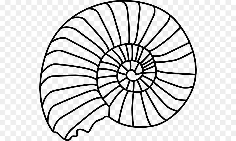 fossil ammonites seashell clip art sand dollar clipart png rh kisspng com sand dollar clip art black and white