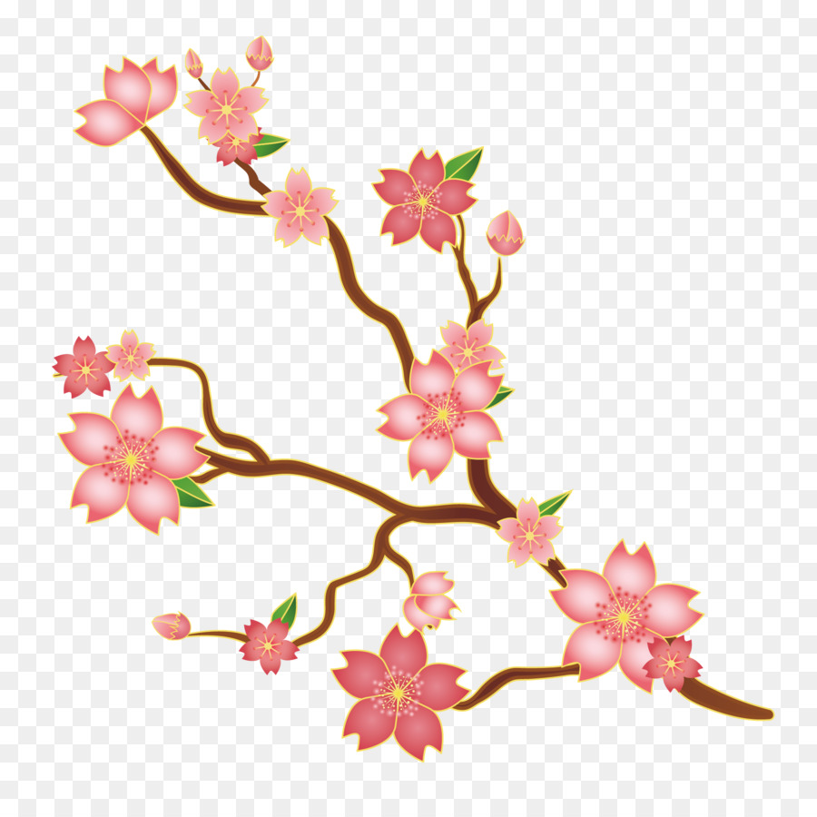Cherry Blossom Fl Design Euclidean Vector Ilration Pink Anese Blossoms