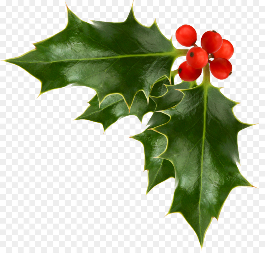 Common Holly Christmas Free Content Clip Art