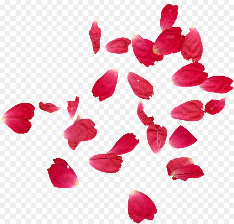 Faridabad Kelopak Bunga Mawar Henna Jatuh Kelopak Mawar Unduh