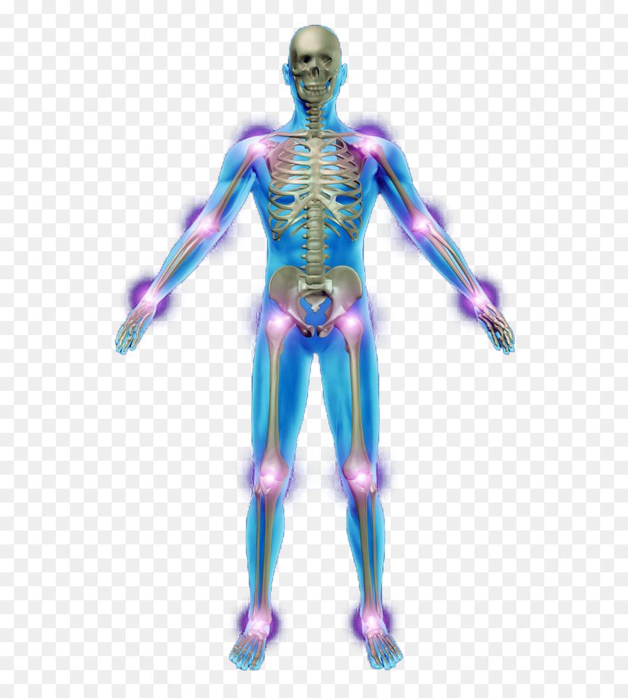 Human skeleton Photography Anatomy Bone - Human Skeleton png ...