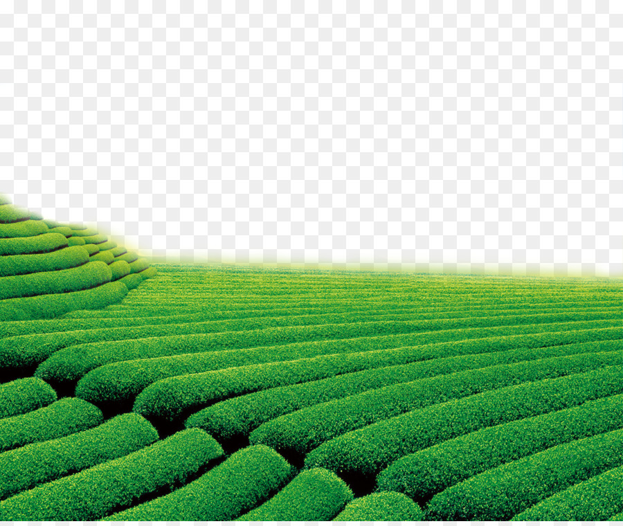 Theatrical Scenery Green Television Wallpaper