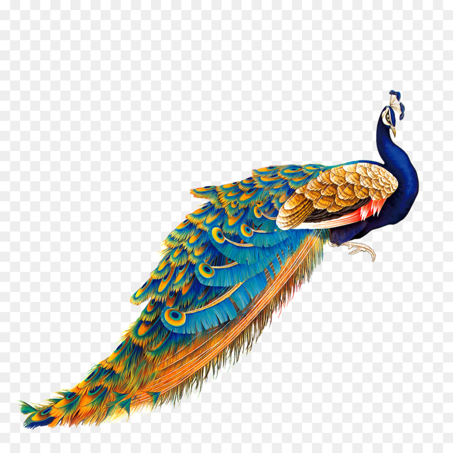 bird peafowl painting color golden peacock png download 1000