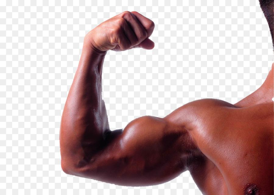 Bíceps del Brazo músculo Tríceps braquial Braquial - Robustos ...