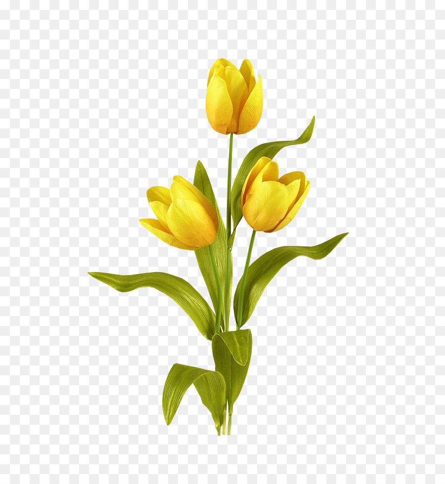 Tulip Mania Flower Bouquet Bulb Blooming Yellow Tulips Png