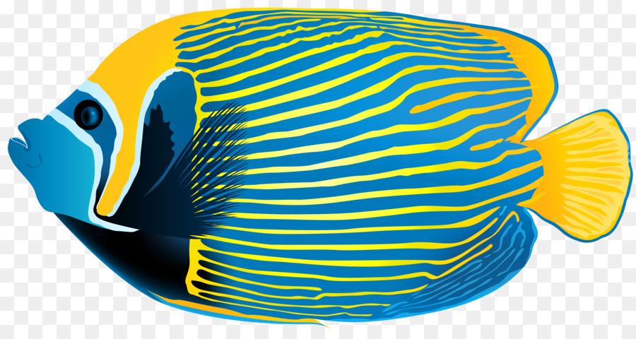 emperor angelfish queen angelfish clip art angel fish cliparts png rh kisspng com Starfish Clip Art angelfish clipart