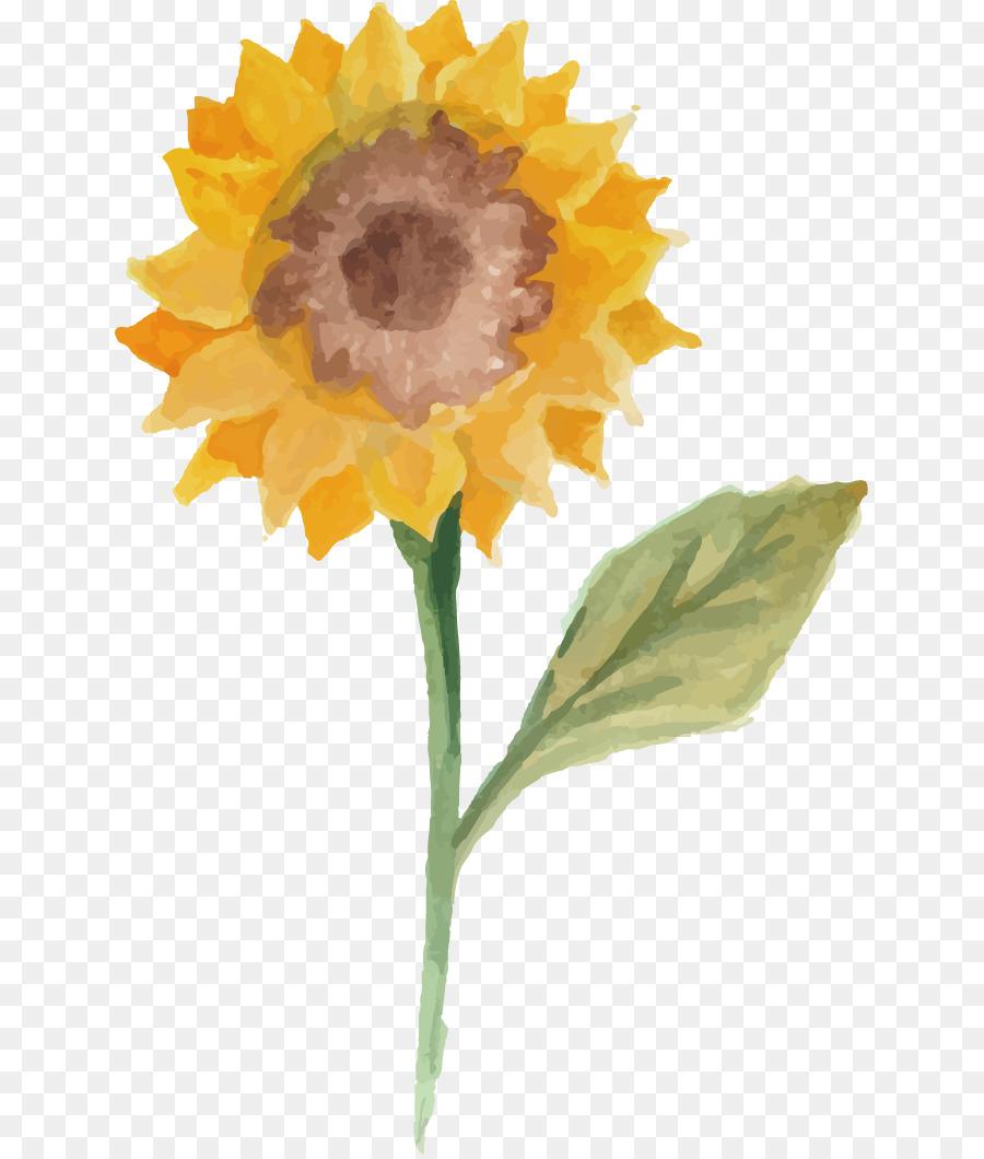 Umum Bunga Matahari Lukisan Cat Air Ilustrasi Vektor Cat Air