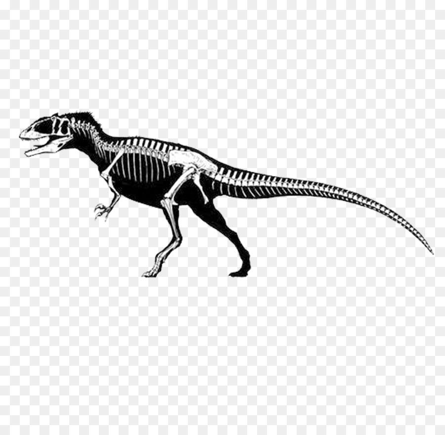 Carcharodontosaurus Eocarcharia Gigantosauro Spinosaurus ...