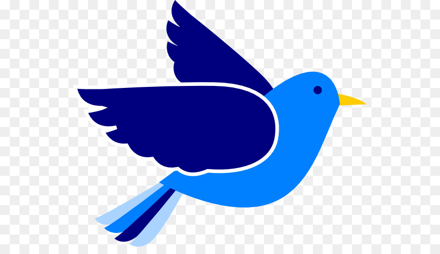 eastern bluebird mountain bluebird clip art blues cliparts png