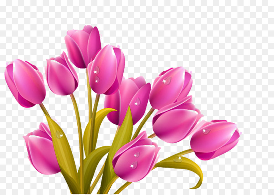 Tulip Flower bouquet Clip art - Cartoon purple tulip picture ...