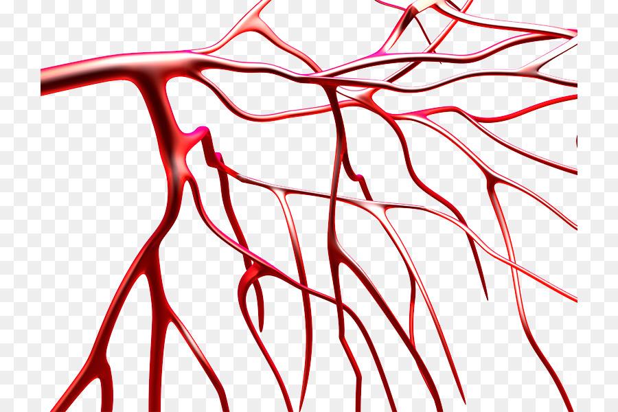 Blood Vessel Platelet Blood Vessels Png Download 782600 Free